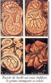 Tavole di Aselli sui vasi chiliferi: le prime stampate a colori